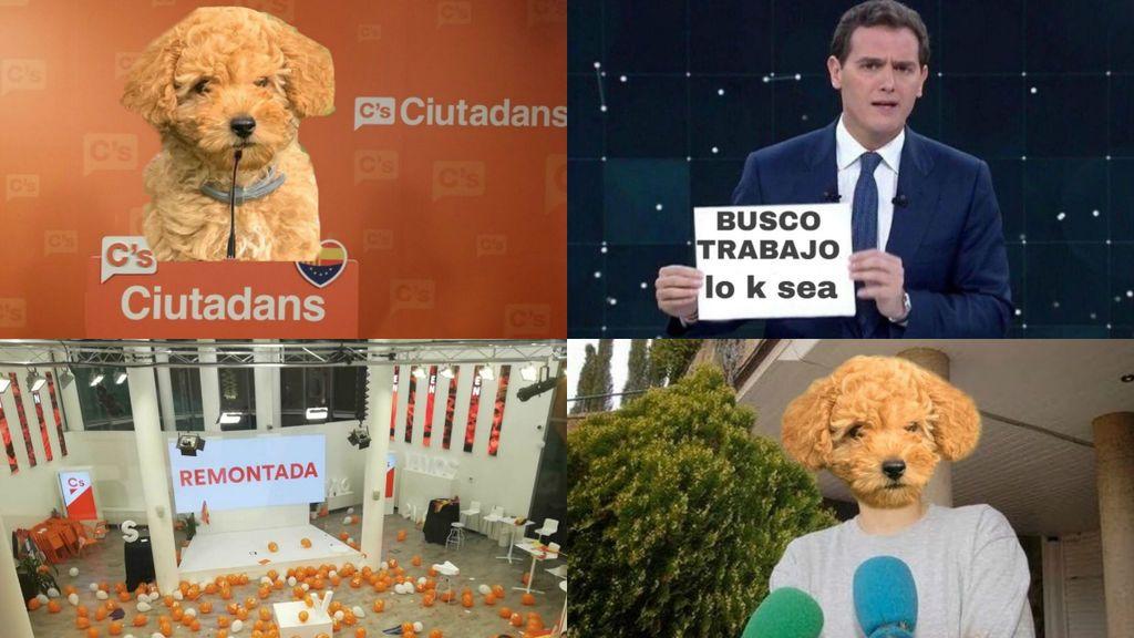 El adiós de Rivera desata el ingenio de los memes: el perro Lúcas, Malú y Arrimadas