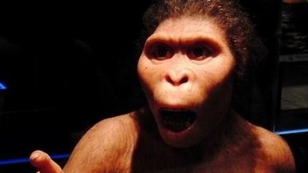 El gorila Koko, el bonobo Kanzi: El simio de hoy en día es más inteligente que Lucy, el ancestro prehumano