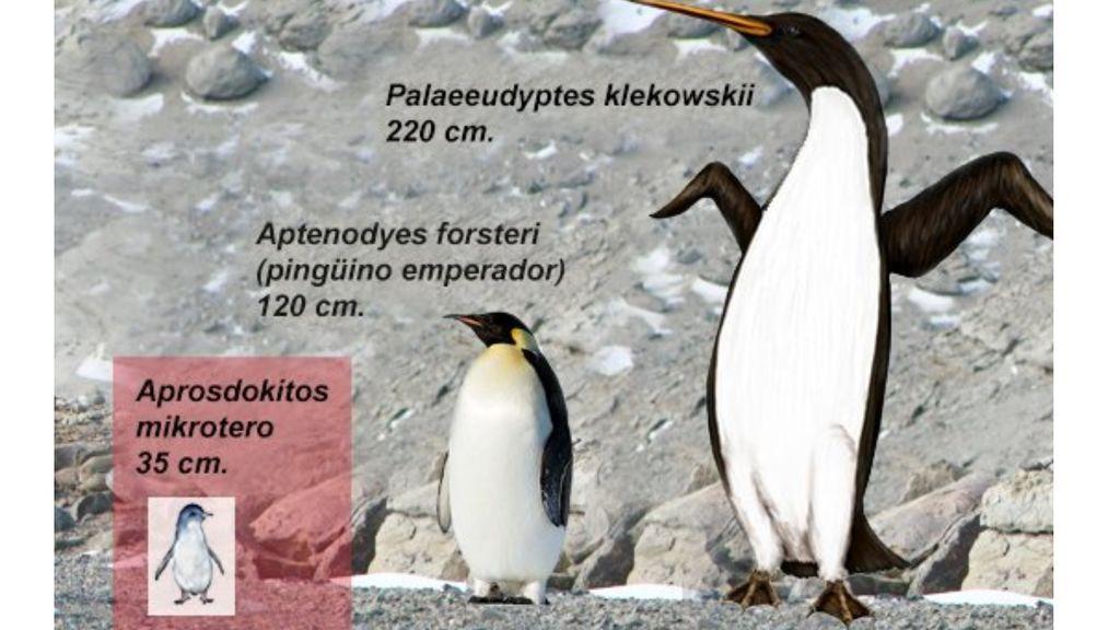 Encuentran restos fósiles de un pingüino gigante de 35 millones de años de antigüedad en la Antártida