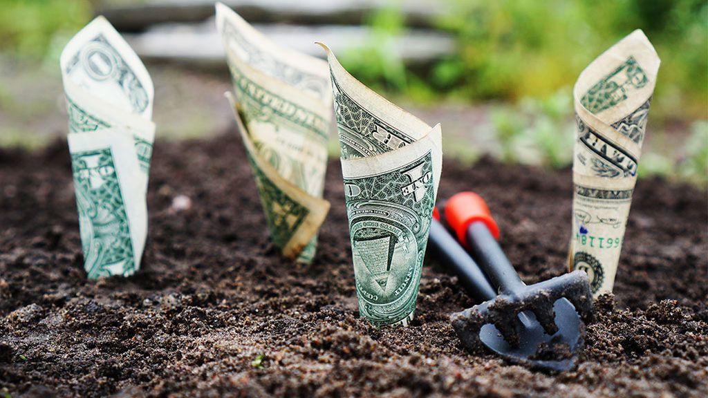 Plantar dinero