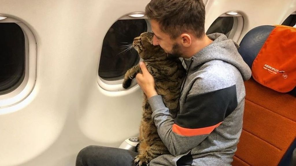 No dejan embarcar a un gato por exceso de peso: su dueño consiguió viajar con él engañando a la compañía