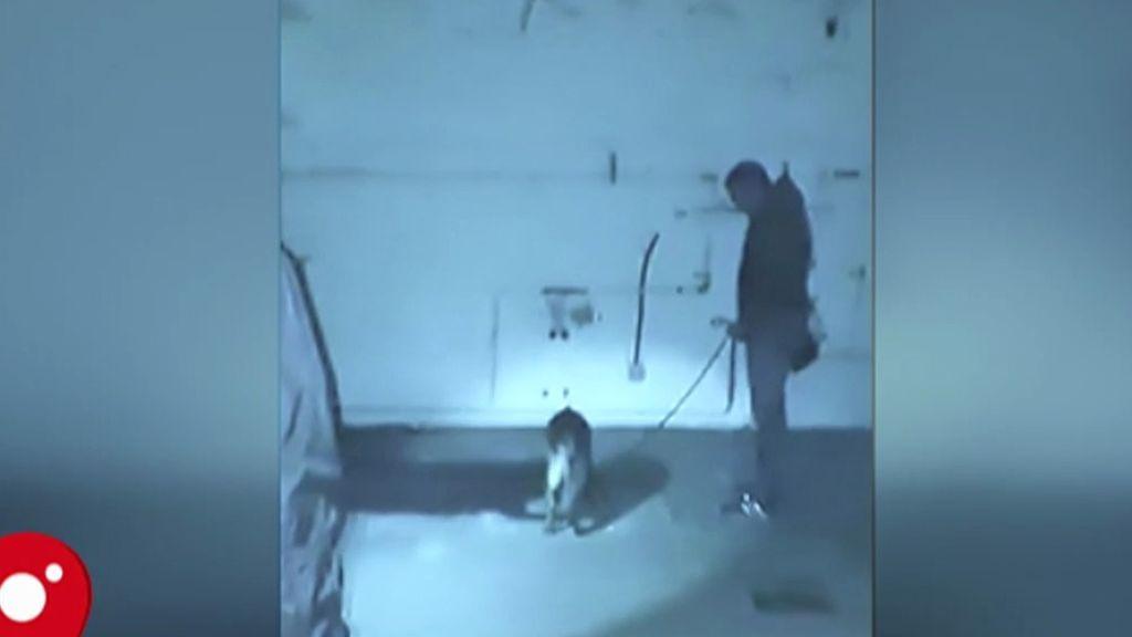 La otra imagen del juicio: Elton, el perro que encontró el pozo donde estaba Diana