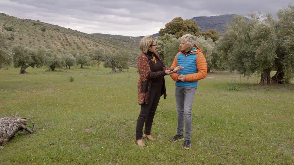 ¿Qué diferencias hay entre un aceite de oliva virgen y uno normal? ¿Cuál es mejor?
