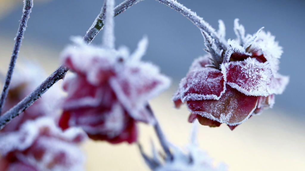 El frío nocturno congela el país: por qué se crean las heladas