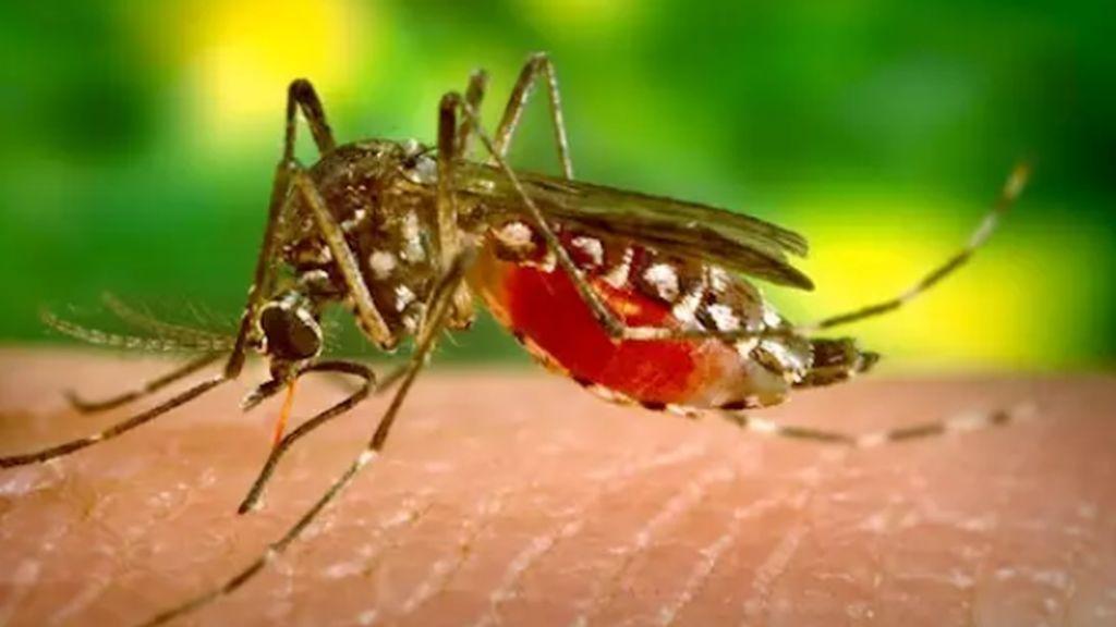El mosquito amenaza a Europa con la ayuda de la globalización: el dengue y el zika se extienden