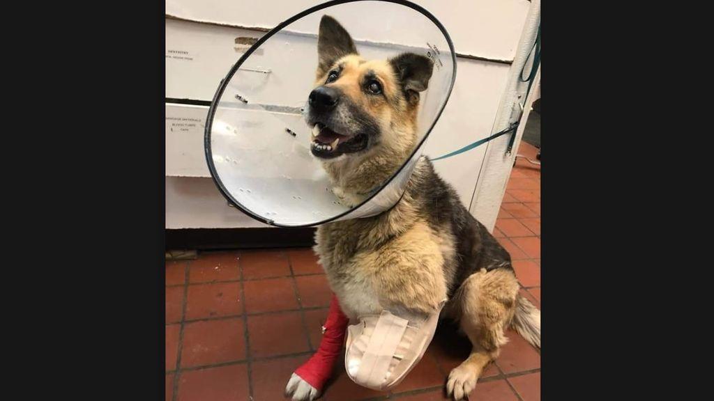 El dueño de Zoe, acusado de maltrato animal: el perro intentó comerse su propia pata al no tener comida ni agua