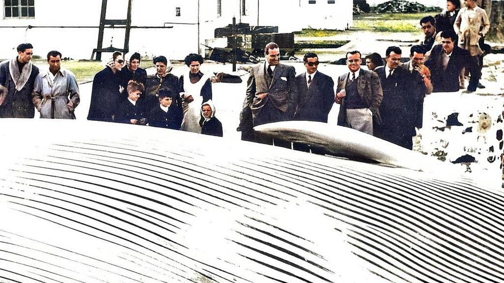 Una ballena en la explanada observada por curiosos hacia 1952