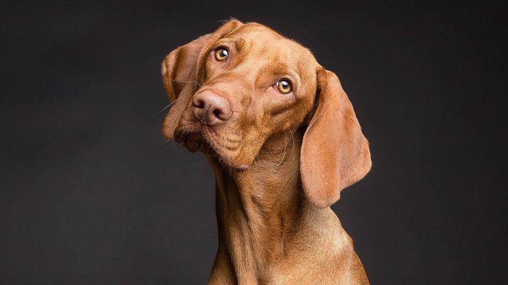Dan el alto a un perro que conducía en círculos el coche de su dueño
