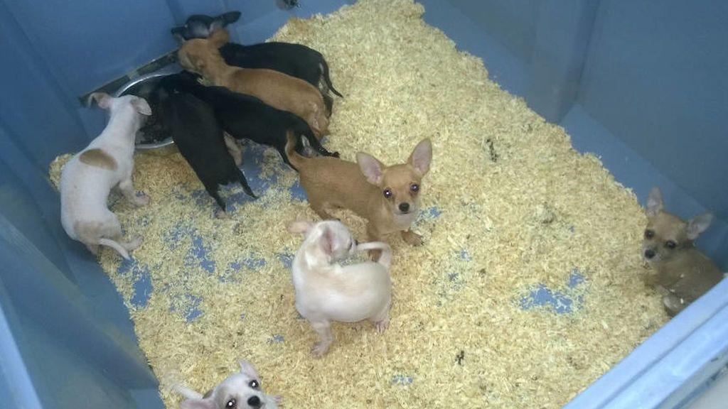 Cárcel para los dueños de una tienda de mascotas