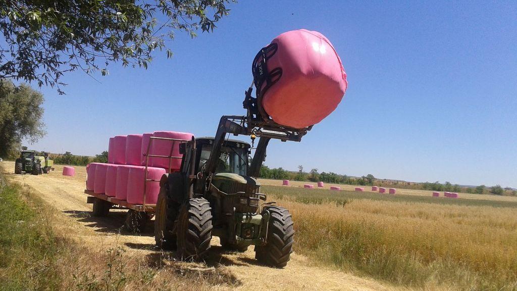Los campos de Cantabria se tiñen de rosa por el cáncer de mama