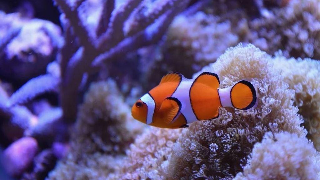 Nemo se queda sin hogar