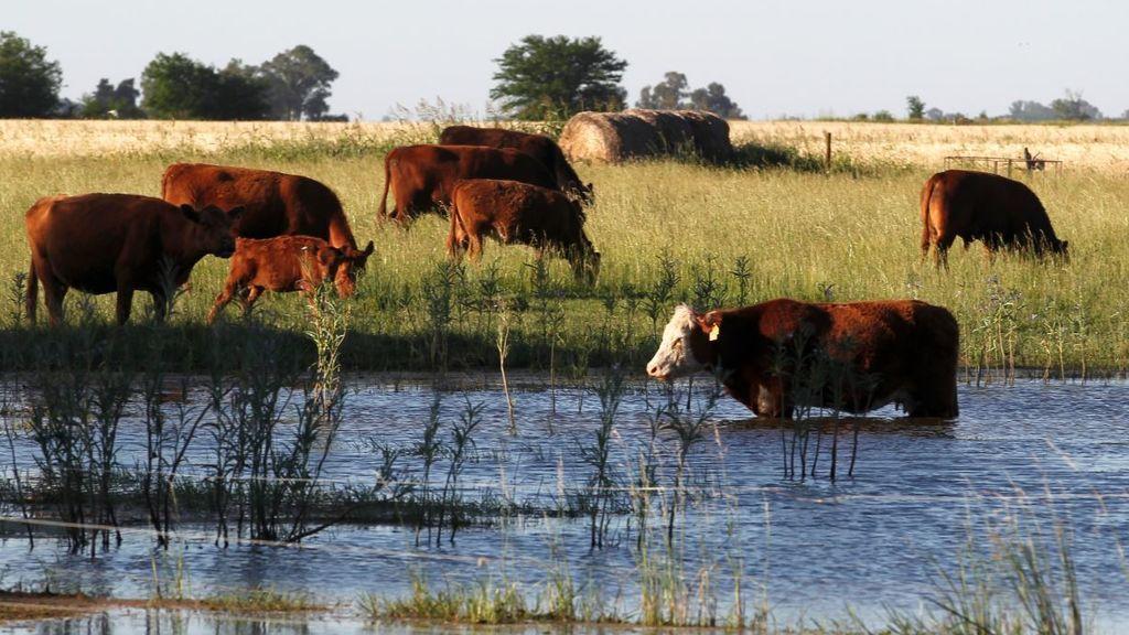 Argentina, carne de crisis ante el cambio climático