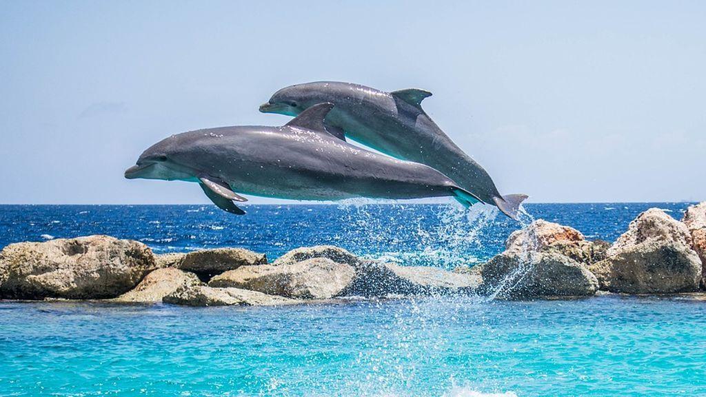 """Una niña de 10 años está cerca de """"morir"""" tras ser arrastrada por dos delfines durante una actividad"""