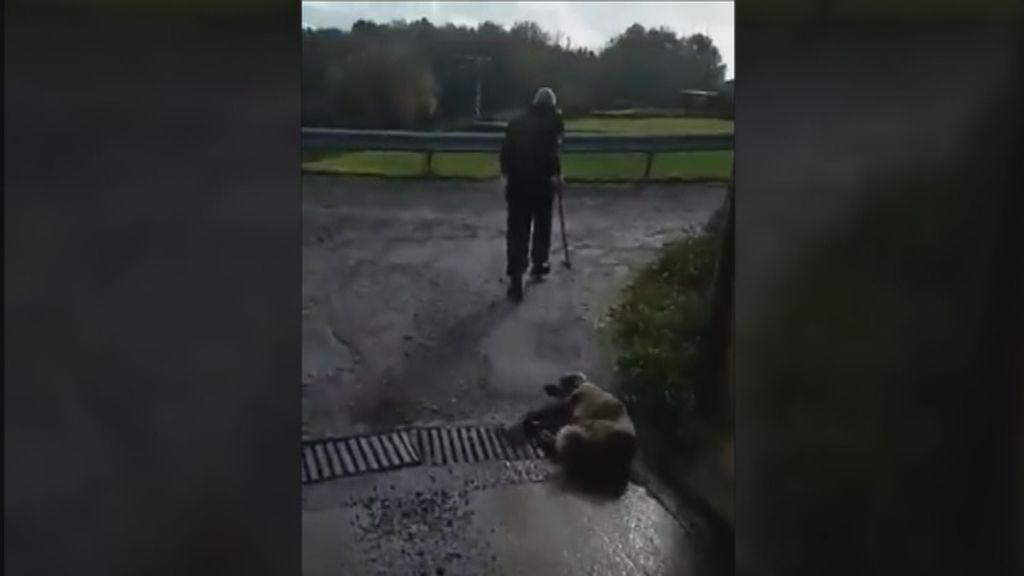 Identificado el cazador que disparó y golpeó a una perra el pasado fin de semana