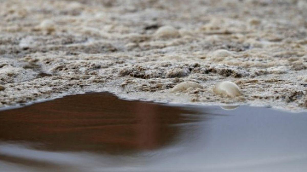 El Canal de Isabel II investiga transformar excrementos en biogás