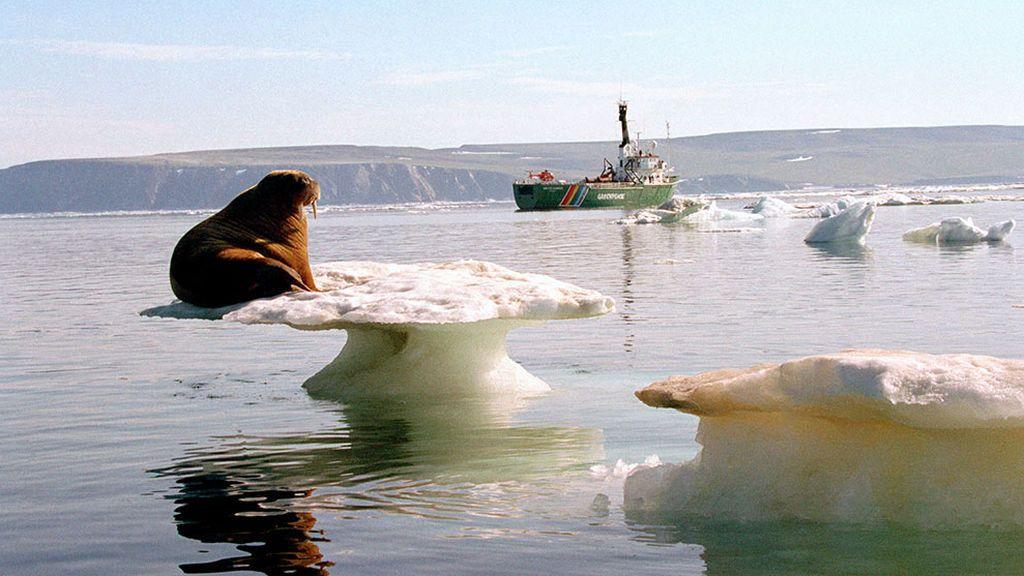 """Greenpeace aprovecha la COP Azul para alertar del """"vertiginoso colapso de los océanos"""""""
