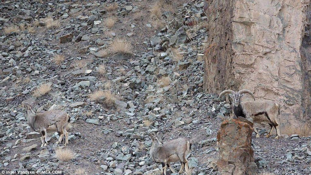 ¿Dónde está el leopardo de las nieves?