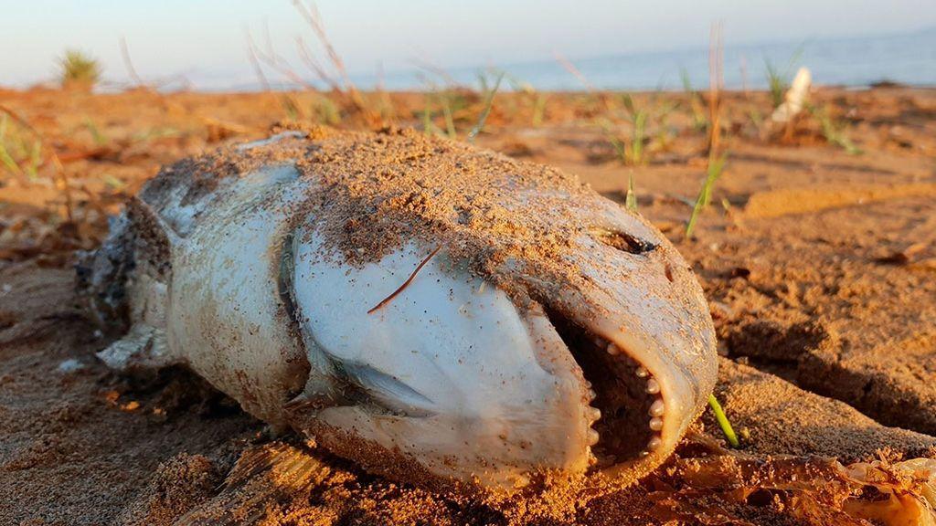 La falta de oxígeno en los océanos pone en jaque a la vida marina y sus ecosistemas