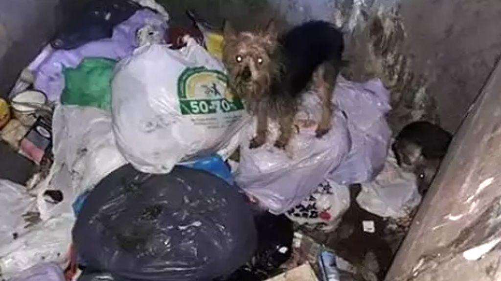 Rescatados con vida una decena de perros abandonados en contenedores de basura soterrados en Alicante
