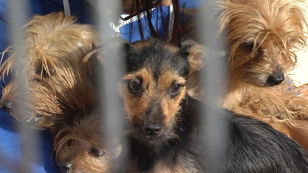 11 perros rescatados in extremis de ser triturados por el camión de la basura