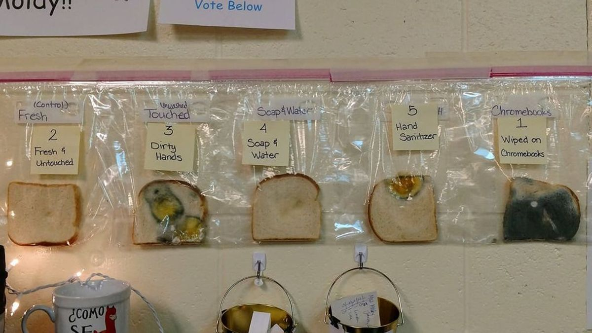La importancia de lavarse las manos reflejada en un experimento viral con pan de molde