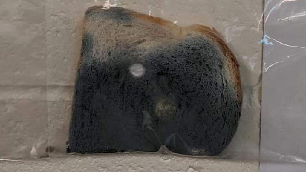 Pan de molde mohoso