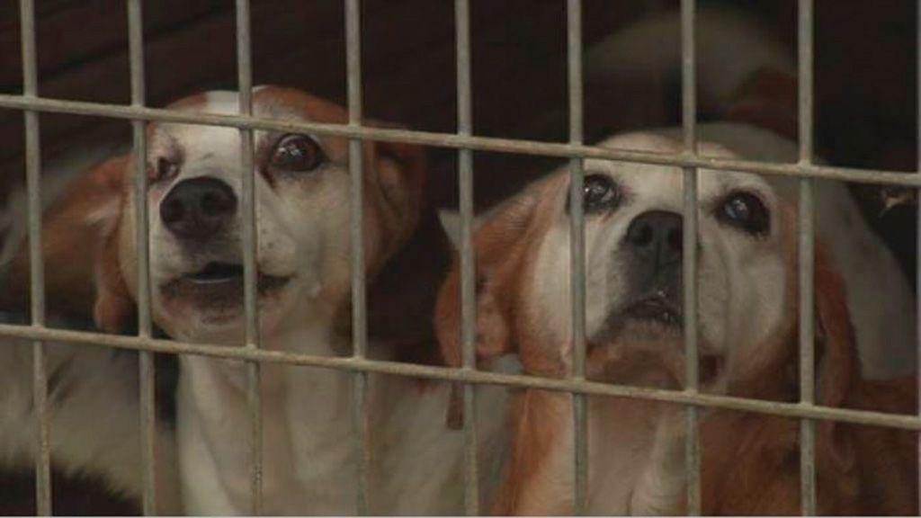 Vox Zaragoza aboga por sacrificar a todos los perros de un centro de acogida que no sean adoptados
