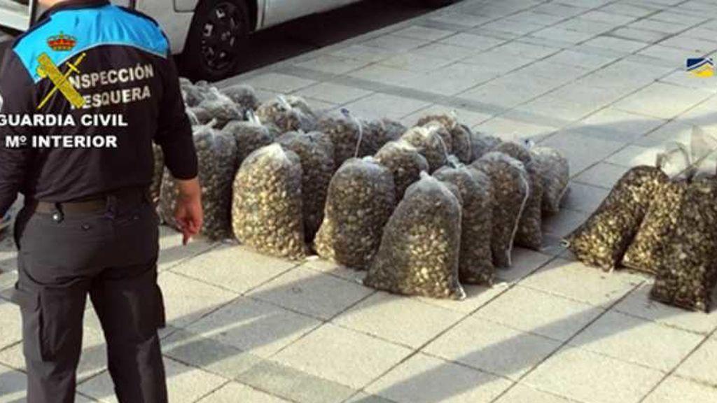 38 toneladas de almejas son retiradas del mercado por la Guardia Civil