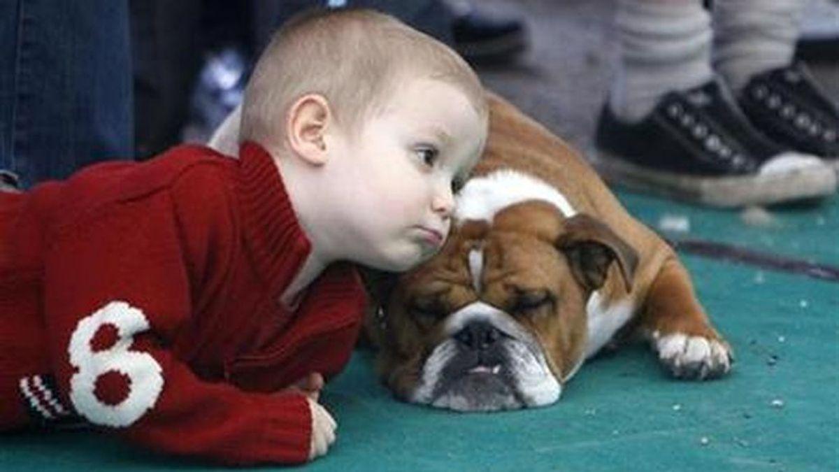 Convivir con perros desde la niñez puede reducir el riesgo de esquizofrenia