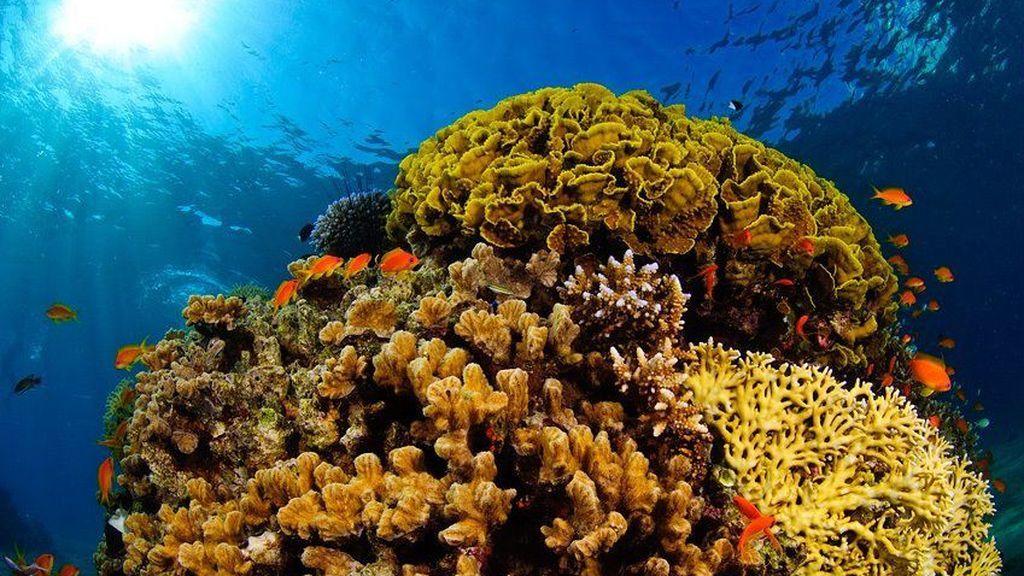El cambio climático obligará a las especies marinas a migrar a zonas mucho más profundas