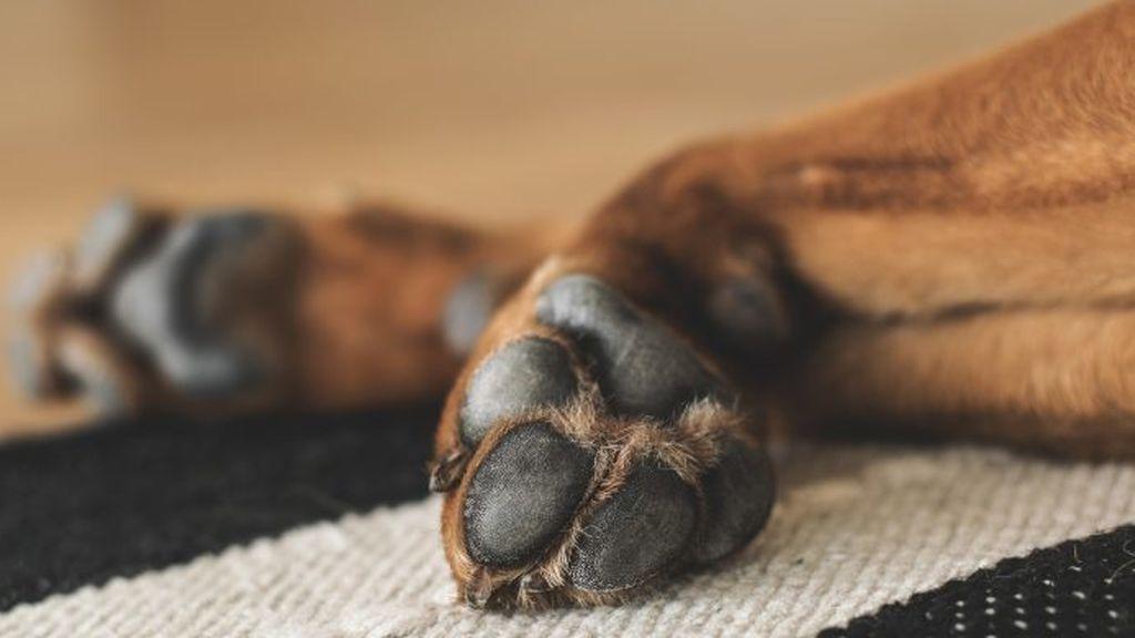 Seis meses sin mascota y una multa de 480 euros por maltratar a un perro en Lugo