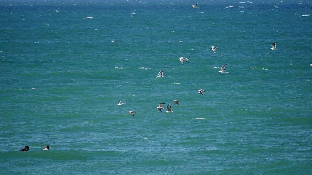 Gaviotas volando sobre los surfistas