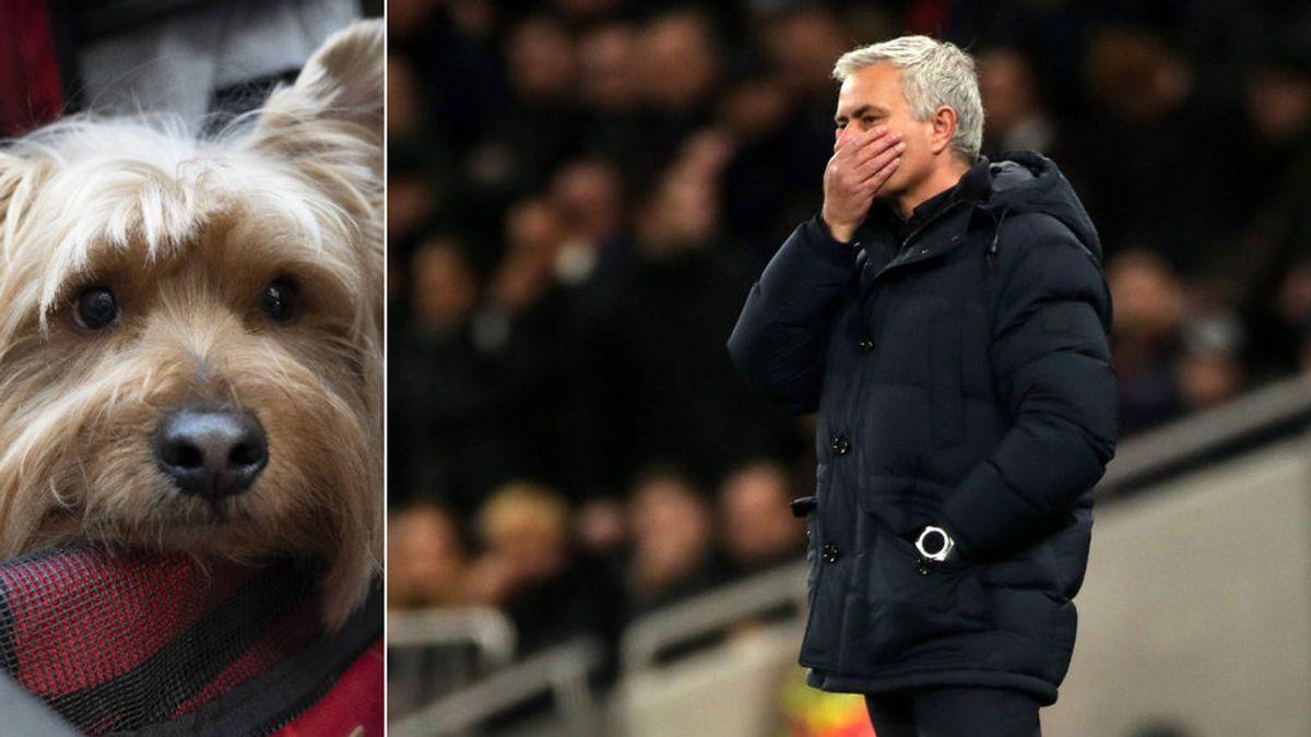 """Mourinho: """"Mis navidades han sido muy tristes porque mi perro murió y era parte de mi familia"""""""