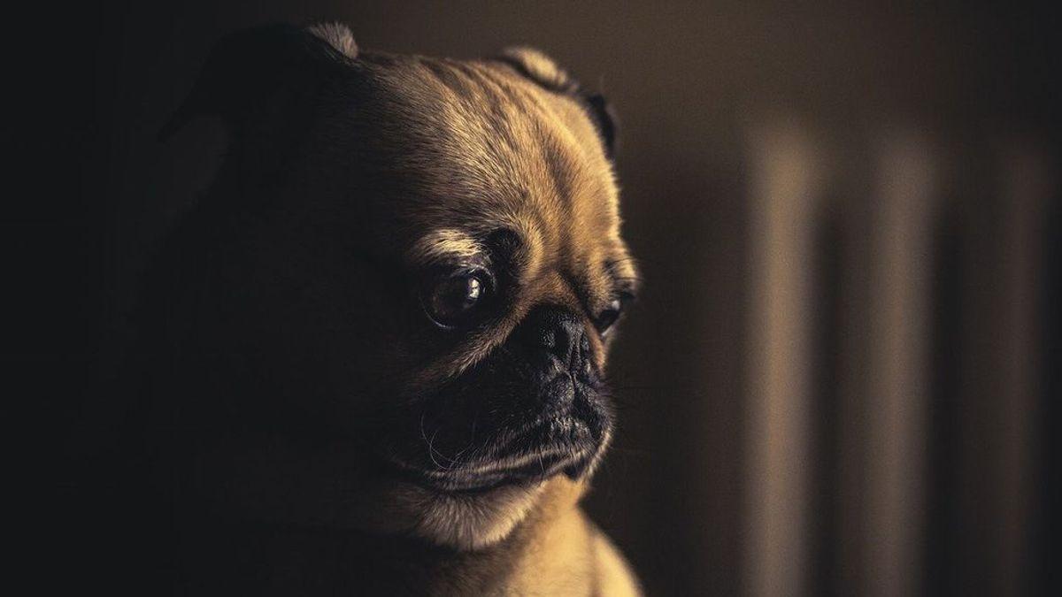 Los peligros de la pirotecnia para las mascotas: cómo calmar a tu perro durante los fuegos artificiales