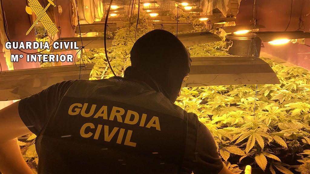 Incautadas 114 plantas de marihuana en una casa ocupada