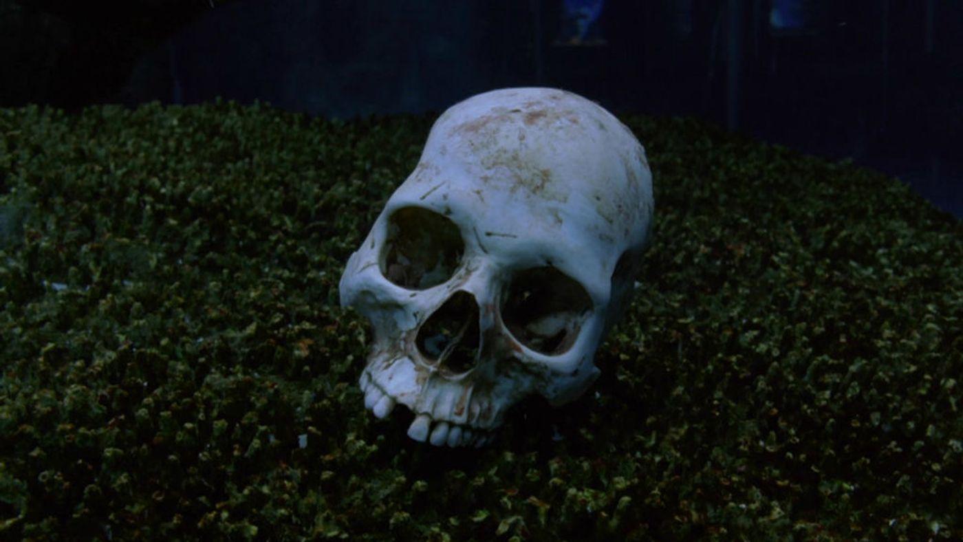 bones102
