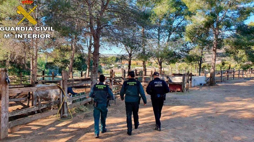 Detenido el dueño de una finca en la que había seis caballos muertos y 19 malnutridos