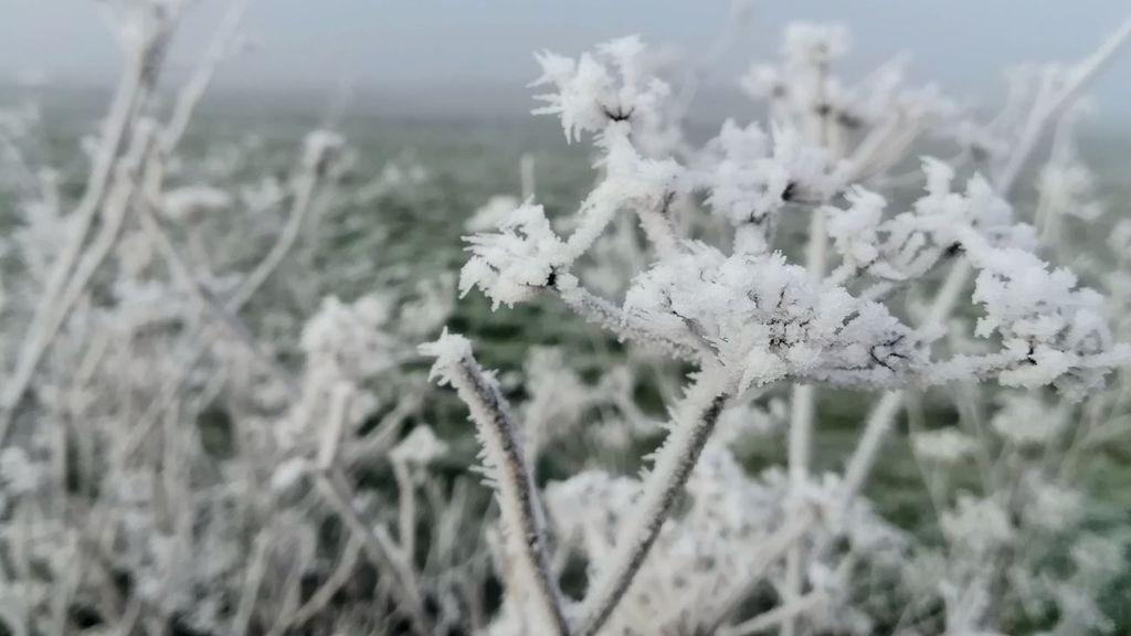 Habrá cencelladas varios días seguidos: qué pasa cuando la niebla se congela