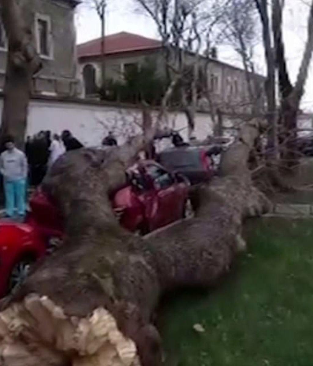 Un árbol de gran tamaño cae sobre varios peatones en Estambul