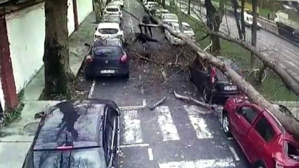 Tres peatones se salvan 'de milagro' tras la inesperada caída de un árbol de gran tamaño en Estambul