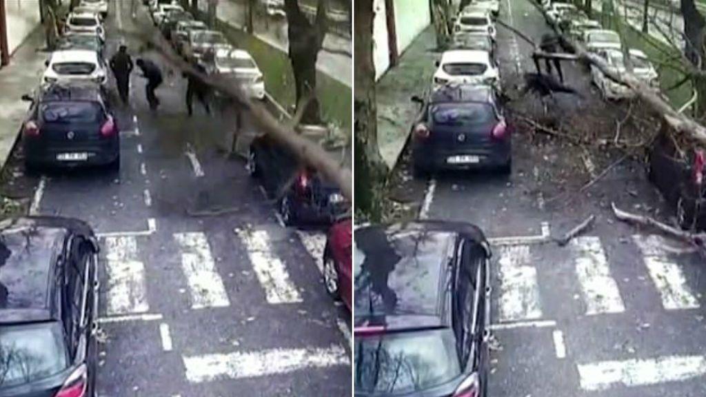 Tres peatones salen heridos leves tras salvarse ante la caída de un árbol de gran tamaño en Turquía
