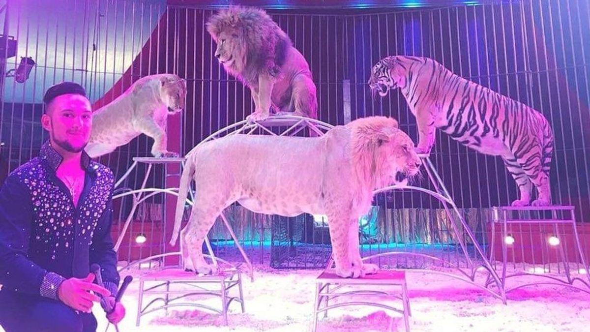 En Madrid no habrá circos con animales salvajes desde abril