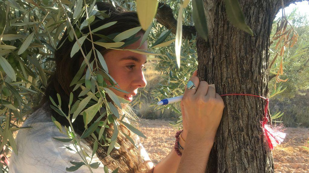 olivomadrina