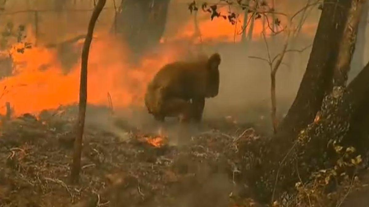 500 millones de animales han muerto en los incendios de Australia