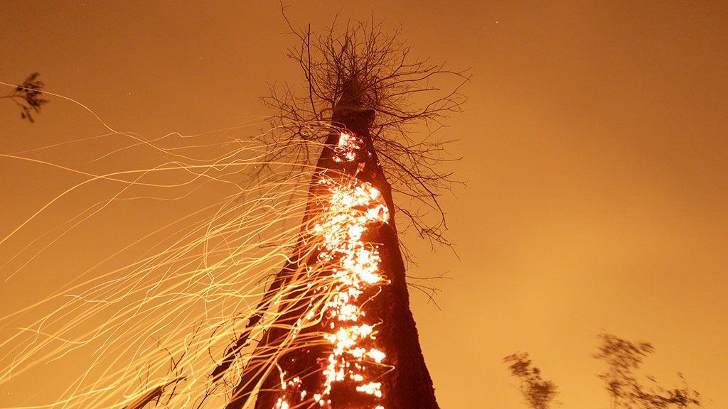 Un tramo de la selva amazónica arde mientras es limpiado por los agricultores en Río Pardo, Rondonia (Brasil)