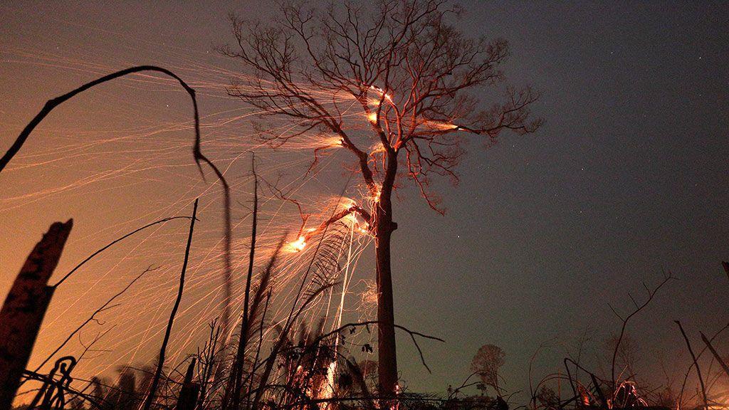 Un tramo de selva amazónica arde al ser despejado por agricultores en Río Pardo, Rondonia (Brasil)