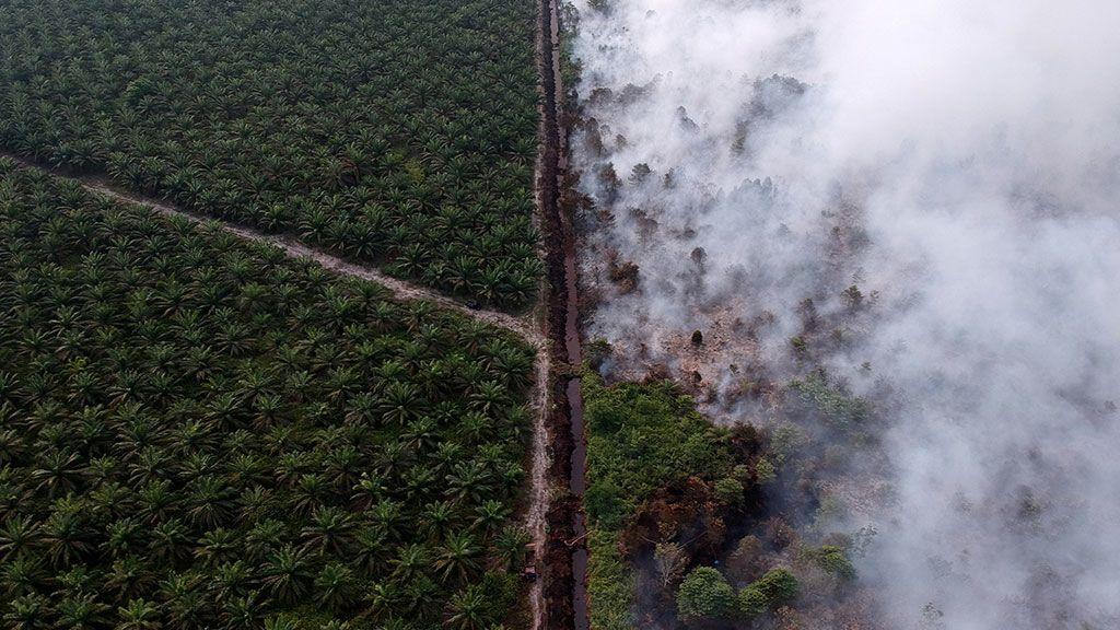 Un incendio se acerca a una plantación de palmeras en el distrito de Kumpeh Ulu en Muarojambi, Indonesia