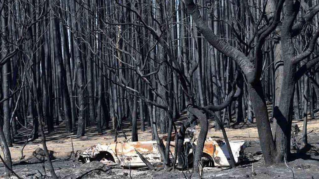 Vista de Isla Canguro tras los incendios