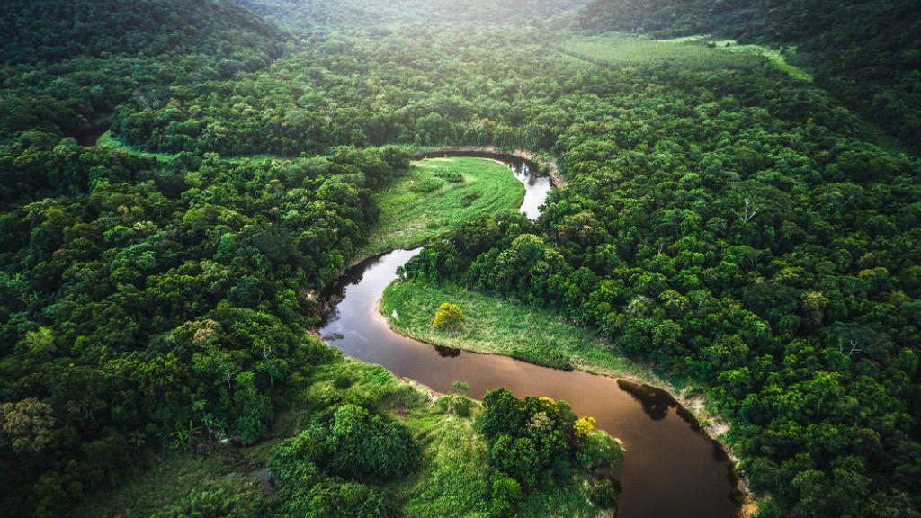 Así sobrevivió una niña de 4 años sola en la selva brasileña durante cinco días