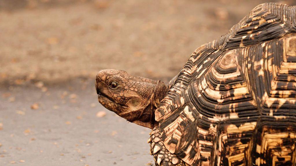 Sancionado con 20.700 euros por intentar devolver tortugas a su hábitat